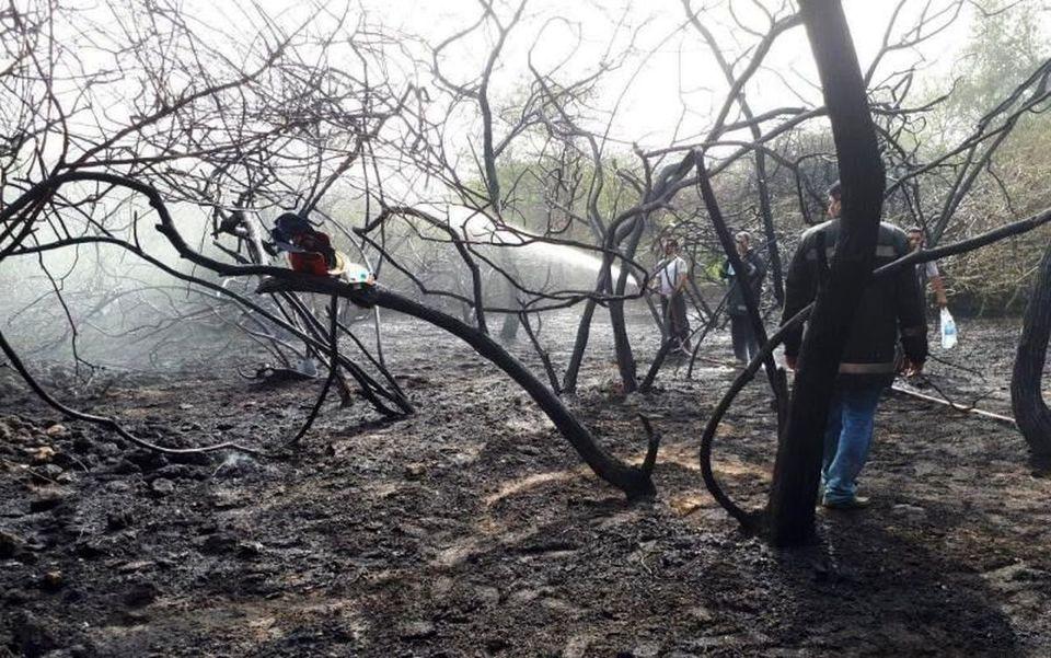 آتش سوزی ۵۰ اصله درخت در کیش
