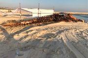 علت مرگ دومین نهنگ یافت شده در ساحل کیش هنوز مشخص نیست